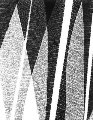 Oleander Photograph - Oleander Leaves by Albert Koetsier X-ray