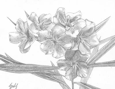 Drawing - Oleander by Lew Davis
