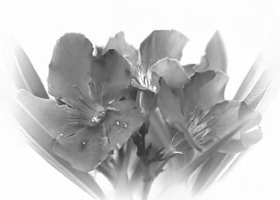 Photograph - Oleander by Olga Hamilton