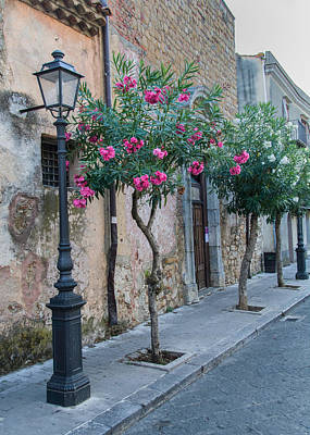 Photograph - Oleander Trees In Castelbuono Sicily by Alan Toepfer
