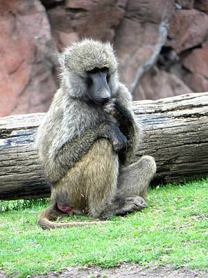 Olive Baboon Art Print by Michael Caron