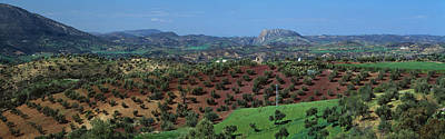 Olive Groves Andalucia Spain Art Print by Panoramic Images