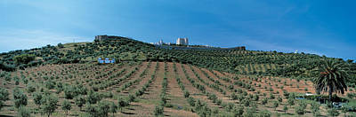 Olive Groves Evora Portugal Art Print by Panoramic Images