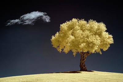 Lonely Tree Wall Art - Photograph - Olive by Martin Zalba