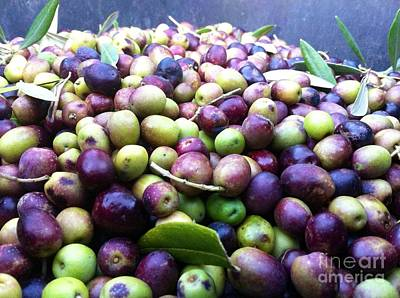 Photograph - Olive Oil by Carolina Abolio