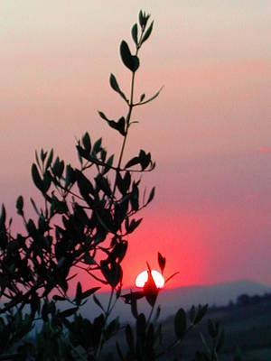Photograph - Olive Tree At Sunset by Dorothy Berry-Lound