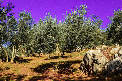 Photograph - Olive Tree Field by Dany Lison