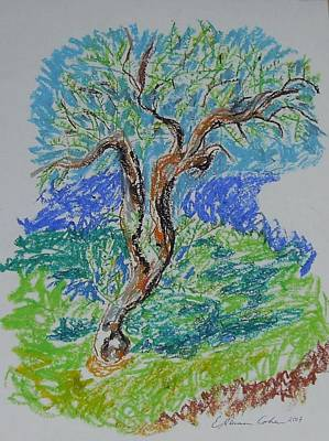 Drawing - Olive Tree In Fall by Esther Newman-Cohen