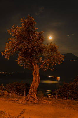 Photograph - Olive Tree Under Moonlight by Jeffrey Teeselink