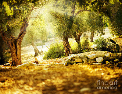 Art Print featuring the photograph Olive Trees by Boon Mee