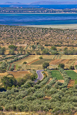 Photograph - Olive Trees Grove And Vrana Lake by Brch Photography