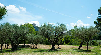 Olive Trees In Front Of The Ancient Art Print by Panoramic Images