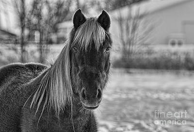 Photograph - Olivias Horse Black And White by David Arment