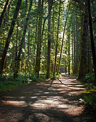 Dappled Light Photograph - Olympic National Park Forest Path by Julie Magers Soulen