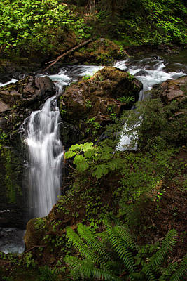 Rainforest Photograph - Olympic National Park by Larry Marshall