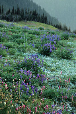 Photograph - Olympic Wildflowers by Chris Scroggins