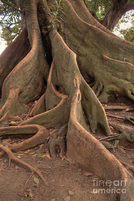 Photograph - Ombu Roots by Deborah Smolinske
