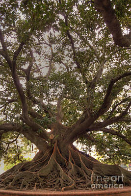 Photograph - Ombu Tree by Deborah Smolinske