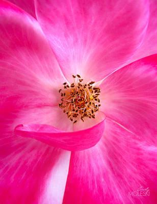 Floral Photograph - Omg Pink II by Cindy Moleski