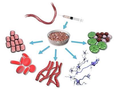 Omnipotent Stem Cells Art Print