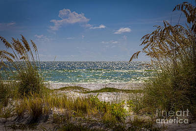 Oats Photograph - On A Clear Day by Marvin Spates