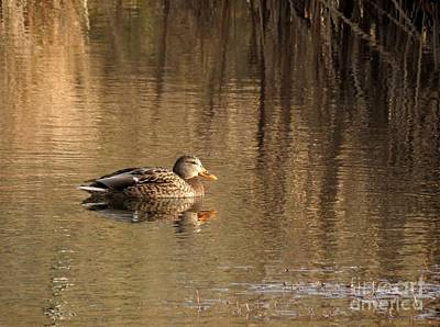 Photograph - On A Golden Pond by Chris Anderson