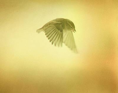 Starlings Digital Art - On A Mission by Gothicrow Images