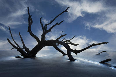 Tree Root Photograph - On A Misty Morning by Debra and Dave Vanderlaan