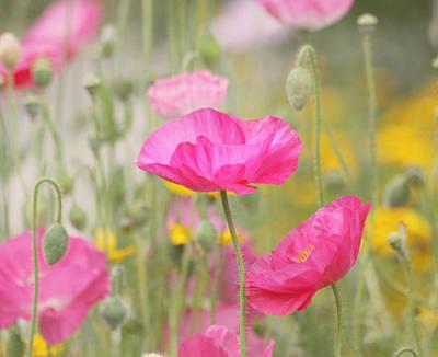 On A Summer Day - Pink Poppy Art Print by Kim Hojnacki