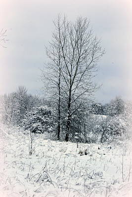 Photograph - On A Winters Day by Kay Novy