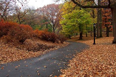 Photograph - On An Autumn Path by Cornelis Verwaal