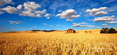 Farm Photograph - On Golden Fields by Bill  Robinson