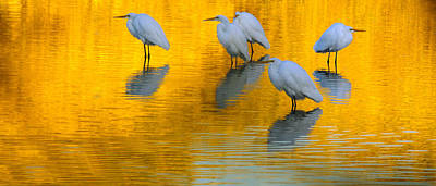 Photograph - On Golden Pond 2 by Tam Ryan