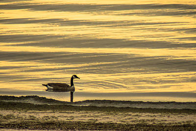 Photograph - On Golden Pond by Bill Pevlor