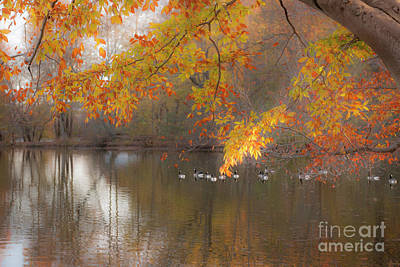 Peavefull Pond Reflections Art Print by Dale Powell