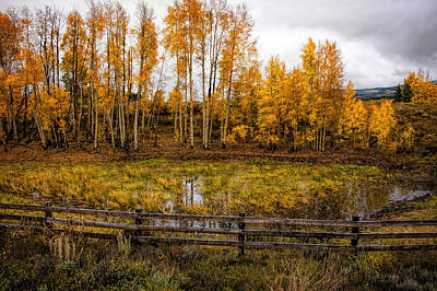 Photograph - On Golden Pond by Ken Smith