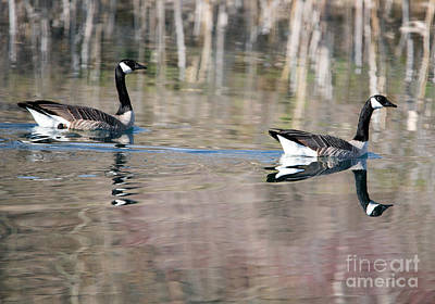 Geese Photograph - On Golden Pond by Mike Dawson