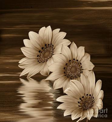 Photograph - On Golden Pond by Shirley Mangini