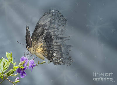 Photograph - On Gossamer Wings by Mariarosa Rockefeller