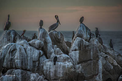 Seabirds Photograph - On Guard by Bill Roberts
