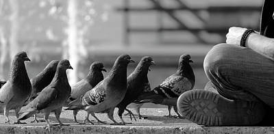 Pigeon Photograph - On Line For Food by Jian Wang