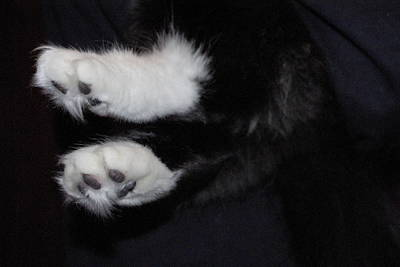 Photograph - On Little Cat Feet by Marilyn Wilson