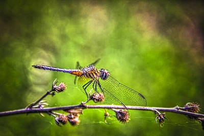 Flies Photograph - On Lookout by Marvin Spates