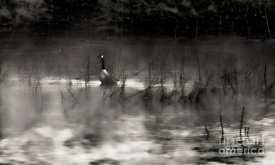 Photograph - On My Way Home Sweet Home by Cris Hayes