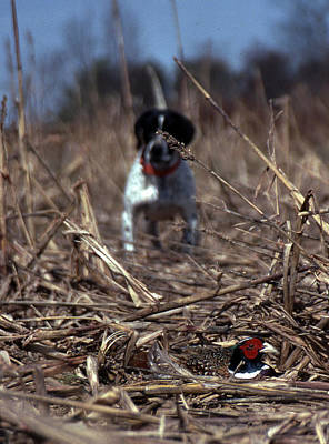 Pheasant Photograph - On Point by Skip Willits
