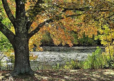 Photograph - On Ponds Edge by Janice Drew