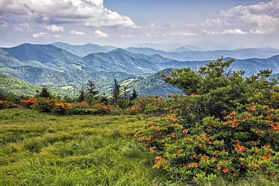 On Roan Mountain 10 Art Print