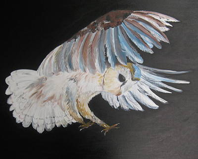 On Silent Wings Art Print by Cathy Jacobs
