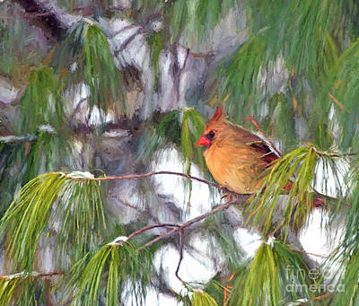 Photograph - On Snowy Branches by Kerri Farley