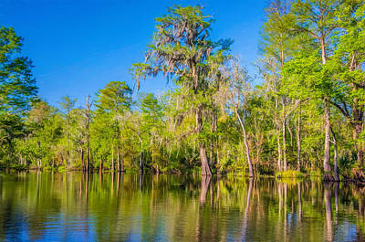 Cypress Swamp Digital Art - On The Bayou 2 - Paint by Steve Harrington